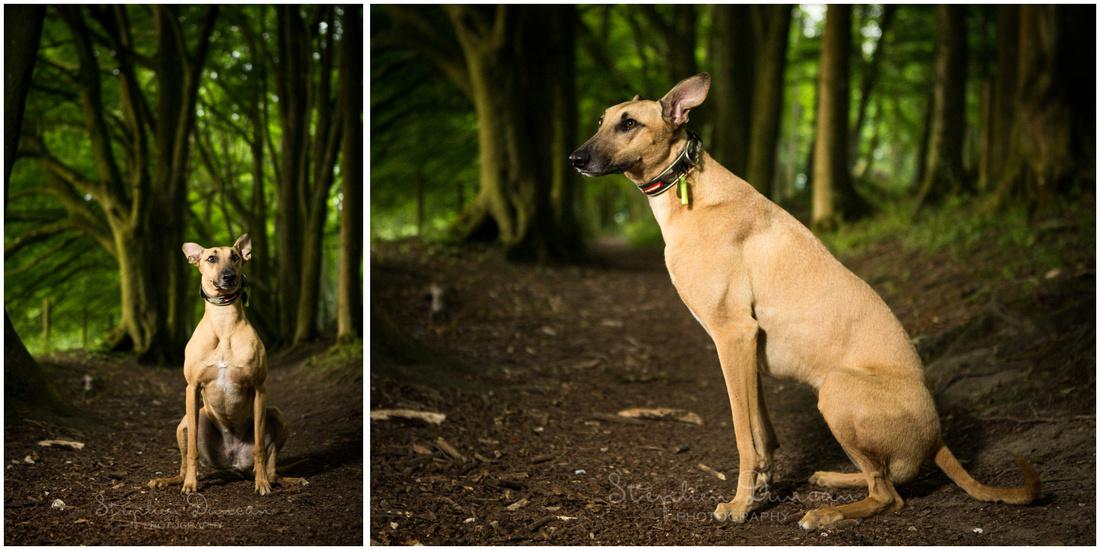 Colour photo dog amongst trees